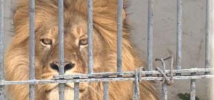 Lev zoopark Tajikistana