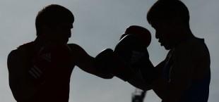 bokser v kome
