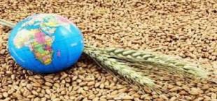 export selhozprodukcii
