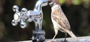 pitevaya voda v tajikskix selax