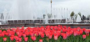 tsvety dushanbe pogoda 5