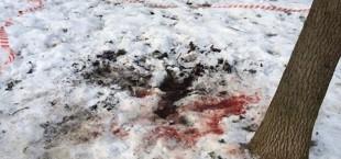 ubiystvo krov na snegu