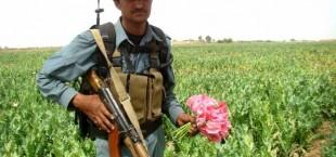 Производство наркотиков в Афганистане при пребывании ISAF выросло в десятки раз