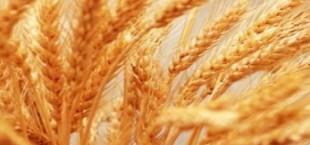 Таджикистан сократил импорт муки, увеличив импорт пшеницы