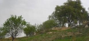 Мардон Буриев и 10 месяцев тюрьмы в Узбекистане