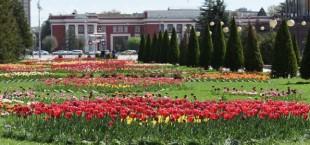 park cveti